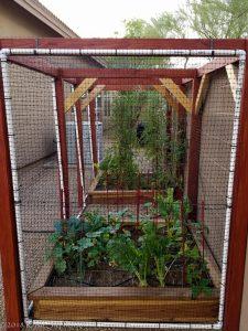 My Low Desert Garden 20180612-Garden-002-2-225x300