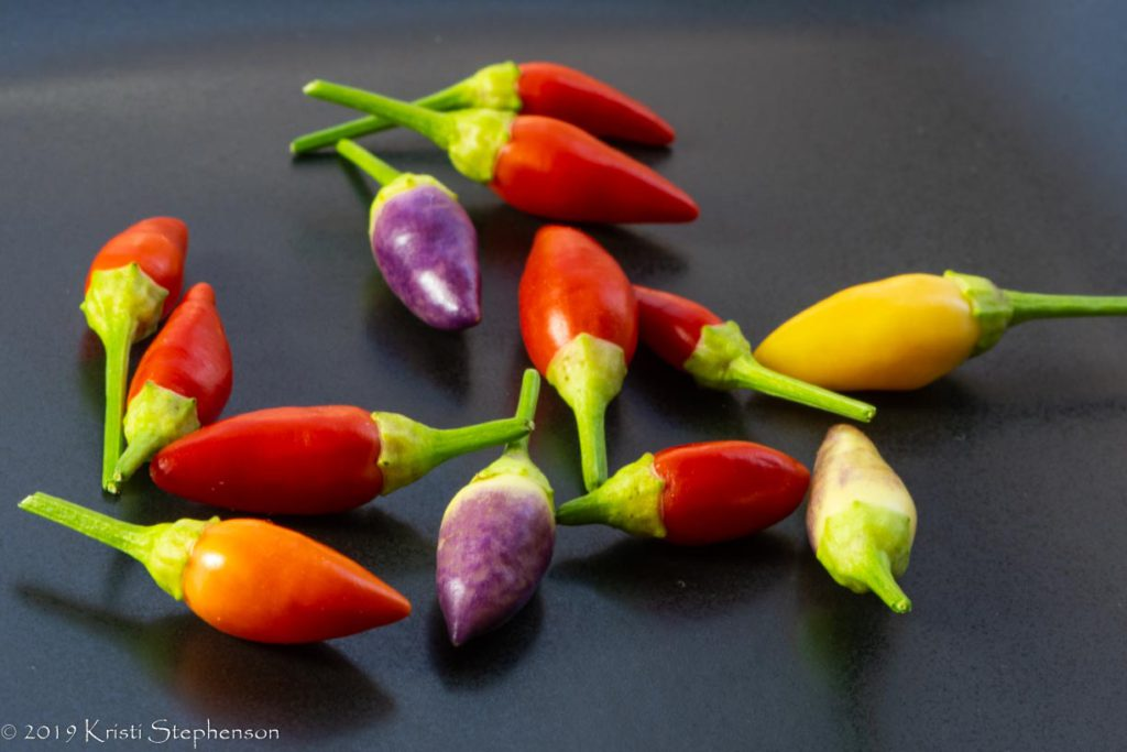 Harvested ordono chiles - array of colors!