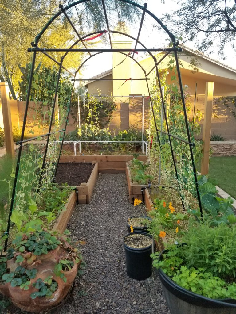 Garden arch for pole beans